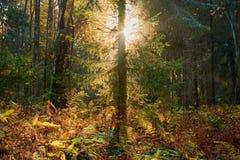 Красочная осень в парке с солнцем излучает стоковое изображение rf