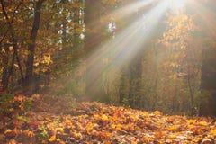 Красочная осень в парке с солнцем излучает стоковая фотография