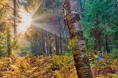 Красочная осень в парке с солнцем излучает стоковые фото