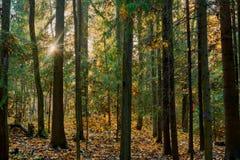 Красочная осень в парке с солнцем излучает стоковое фото