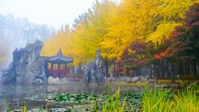 Красочная осень на острове Nami, Южная Корея стоковое фото