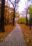 Красочная осень переулка, предпосылка Стоковые Изображения