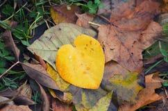 Красочная предпосылка осени сделанная из упаденных листьев осени Абстрактная предпосылка листьев осени крупный план предпосылки о Стоковые Фотографии RF