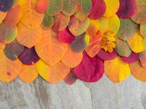 Красочная предпосылка листьев осени на камне Стоковая Фотография RF