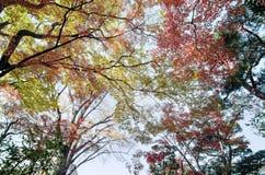 Красочная предпосылка кленового листа в осени Стоковое фото RF