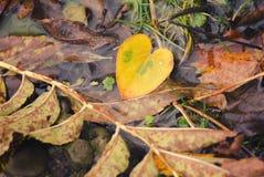 Красочная предпосылка осени сделанная из упаденных листьев осени Абстрактная предпосылка листьев осени крупный план предпосылки о Стоковые Изображения