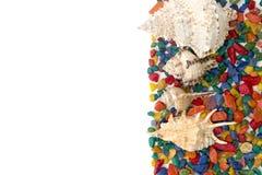 Красочная предпосылка сделанная seashells стоковое фото rf