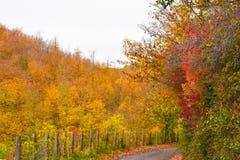 Красочная природа дерева осени Стоковое фото RF
