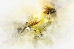 Красочная птица в стиле акварели бесплатная иллюстрация