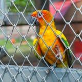 Красочная птица попугая сидя в birdcage Стоковые Фото