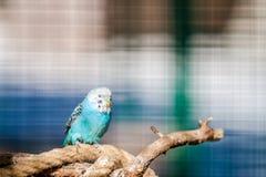 Красочная птица Стоковое Изображение RF