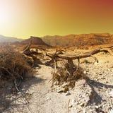Красочная пустыня в Израиле Стоковое Фото