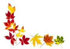 Красочная рамка листьев осени Стоковое Изображение
