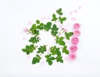 Красочная рамка картины с свежими листьями и цветками роз Стоковая Фотография RF