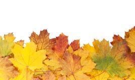 Красочная рамка кленовых листов осени Стоковая Фотография