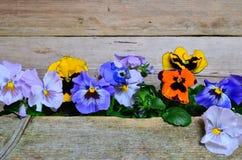 Красочная древесина цветка весны Стоковая Фотография RF