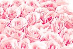 Красочная роза пинка цветет предпосылка для wedding концепции Конспект, идея для карточки приглашения, приветствие, поздравление, Стоковые Фото