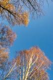 Красочная сень дерева в осени на солнечном утре 5 Стоковая Фотография RF
