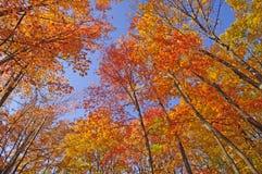 Красочная сень осенью стоковые фото
