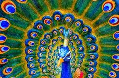 Красочная скульптура мужского павлина Стоковые Изображения