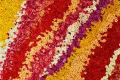 Красочная стена сделанная роз Естественные цветки Стоковые Изображения