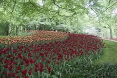 Красочная сцена весны Стоковые Изображения