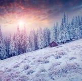 Красочная сцена зимы в прикарпатских горах Стоковое фото RF
