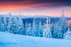 Красочная сцена зимы в прикарпатских горах Стоковое Изображение