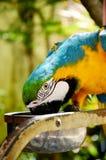 Красочная съемка крупного плана попугая стоковое изображение rf