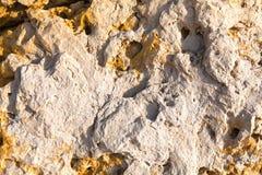 Красочная текстура камня моря Стоковое Изображение