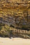 Красочная текстура камня моря Стоковые Фото