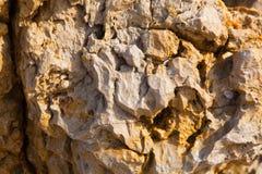 Красочная текстура камня моря Стоковая Фотография
