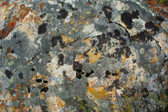 Красочная текстура мха камня утеса Стоковое Фото
