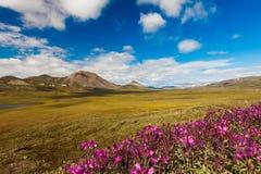 Красочная тундра Chukotka осени, Chukotka Россия стоковое фото rf