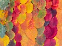 Красочная яркая предпосылка листьев осени Стоковое Изображение RF
