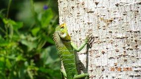 Красочная ящерица взбираясь дерево стоковая фотография
