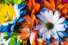Красочное весеннее время цветет предпосылка Стоковые Фотографии RF