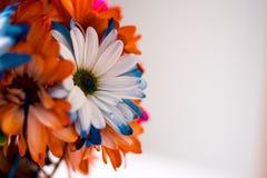 Красочное весеннее время цветет предпосылка Стоковое Изображение