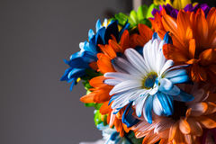 Красочное весеннее время цветет предпосылка Стоковые Изображения
