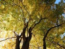 Красочное дерево осени выходит в парк, Литву стоковые фотографии rf