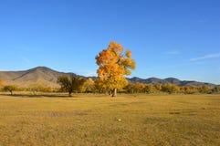 Красочное дерево в монгольской степи в осени Стоковые Изображения RF