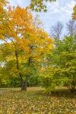 Красочное дерево в парке осени Стоковое Изображение