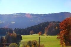 Красочное дерево и зеленая трава Стоковое фото RF