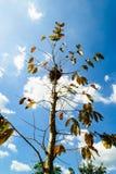 Красочное дерево с гнездом на верхней части Стоковое Изображение RF