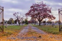 Красочное кладбище Стоковое фото RF