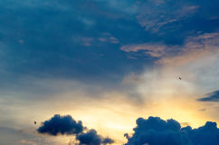 Красочное небо вечера с птицами Стоковая Фотография