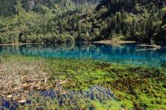 Красочное озеро в национальном парке Jiuzhaigou Сычуань Китая Стоковое Изображение