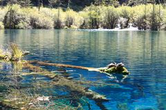Красочное озеро в национальном парке Jiuzhaigou Стоковое Фото