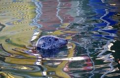 Красочное отражение сломанное головой уплотнения Стоковые Фото