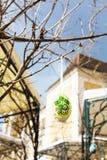 Красочное покрашенное пасхальное яйцо на дереве Стоковое фото RF